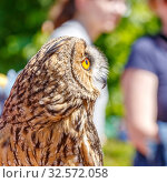A long-eared owl sits on the owner's hand on a summer sunny day. Стоковое фото, фотограф Акиньшин Владимир / Фотобанк Лори