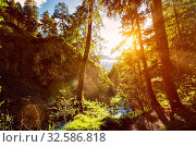 Купить «Green forest with sunrays in summer. With lens flare and light leak», фото № 32586818, снято 9 апреля 2020 г. (c) easy Fotostock / Фотобанк Лори