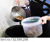 Купить «Packing olives in plastic containers», фото № 32590298, снято 10 декабря 2019 г. (c) Яков Филимонов / Фотобанк Лори