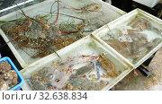 Купить «Thailand fresh seafood on street market», видеоролик № 32638834, снято 23 ноября 2019 г. (c) Игорь Жоров / Фотобанк Лори
