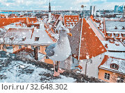 Купить «Iconic view of Tallinn old city skyline with popular local seagull», фото № 32648302, снято 2 декабря 2019 г. (c) Kira_Yan / Фотобанк Лори