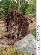 Купить «Bei einem Sturm entwurzelter Baum - Nahaufnahme Umweltschaden», фото № 32674770, снято 1 июня 2020 г. (c) easy Fotostock / Фотобанк Лори