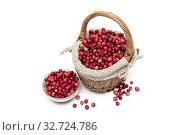Ripe cranberries on a white background. Стоковое фото, фотограф Ласточкин Евгений / Фотобанк Лори