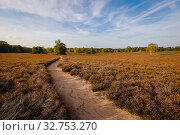 Westruper Heide, Muensterland, North Rhine-Westphalia, Germany (2019 год). Редакционное фото, агентство Caro Photoagency / Фотобанк Лори
