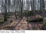 Купить «Hovmantorp, Sweden, deciduous forest in spring», фото № 32753318, снято 14 апреля 2017 г. (c) Caro Photoagency / Фотобанк Лори