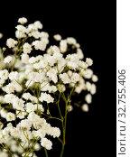Купить «Белый качим, или гипсофила», фото № 32755406, снято 8 декабря 2019 г. (c) Tamara Kulikova / Фотобанк Лори