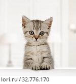 Купить «Portrait of a cute little fluffy kitten», фото № 32776170, снято 20 ноября 2019 г. (c) Алексей Кузнецов / Фотобанк Лори