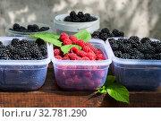 Купить «Blackberry and raspberry in containers outdoor», фото № 32781290, снято 23 августа 2019 г. (c) Короленко Елена / Фотобанк Лори