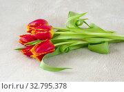 Красные тюльпаны на светлом фоне. Стоковое фото, фотограф Елена Коромыслова / Фотобанк Лори