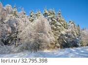 Купить «Зимний лес с заснеженными деревьями в солнечную погоду», фото № 32795398, снято 15 ноября 2016 г. (c) Елена Коромыслова / Фотобанк Лори