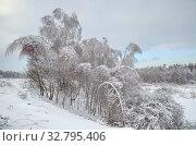 Купить «Заснеженные деревья на берегу реки Учи», фото № 32795406, снято 15 ноября 2016 г. (c) Елена Коромыслова / Фотобанк Лори
