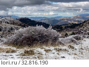 Купить «Icy plants in the mountains (Greece, Peloponnese) on a winter», фото № 32816190, снято 24 декабря 2019 г. (c) Татьяна Ляпи / Фотобанк Лори