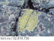 Купить «Ризокарпон географический (лат. Rhizocarpon geographicum) на поверхности большого камня», фото № 32819730, снято 23 августа 2019 г. (c) Наталья Осипова / Фотобанк Лори