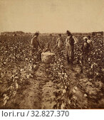 Купить «Cotton Field, A.R. Launey & Rudolph H. Goebel, 1880s, Albumen silver print», фото № 32827370, снято 17 июня 2019 г. (c) age Fotostock / Фотобанк Лори