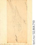 Купить «Coracias garrula, Print, Coracias is a genus of the rollers, an Old World family of near passerine birds related to the kingfishers and bee-eaters. They...», фото № 32864710, снято 17 сентября 2019 г. (c) age Fotostock / Фотобанк Лори
