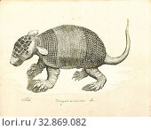 Dasypus unicinctus, Print, Dasypus is the only extant genus in the family Dasypodidae. Its species are known as long-nosed or naked-tailed armadillos.... (2019 год). Редакционное фото, фотограф ARTOKOLORO QUINT LOX LIMITED / age Fotostock / Фотобанк Лори