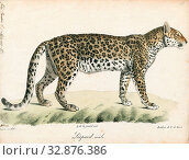 Купить «Felis pardus, Print, The leopard (Panthera pardus) is one of the five extant species in the genus Panthera, a member of the Felidae. It occurs in a wide...», фото № 32876386, снято 17 сентября 2019 г. (c) age Fotostock / Фотобанк Лори