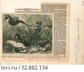Hippocampus antiquorum, Print, 1859 (2019 год). Редакционное фото, фотограф ARTOKOLORO QUINT LOX LIMITED / age Fotostock / Фотобанк Лори