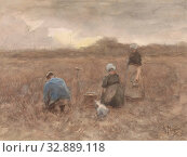 Купить «Potato harvesters, reaping, picking, mowing, harvest, agricultural products and by-products (POTATO), Anton Mauve, 1848 - 1888, paper, brush, h 340 mm × w 458 mm», фото № 32889118, снято 30 мая 2020 г. (c) age Fotostock / Фотобанк Лори