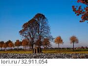 Bunt gefärbte Bäume vor blauem Himmel. Стоковое фото, фотограф Zoonar.com/Helma Spona / age Fotostock / Фотобанк Лори