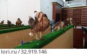 Купить «Selling falcons in Waqif Souq market in Doha, Qatar», видеоролик № 32919146, снято 10 января 2020 г. (c) Володина Ольга / Фотобанк Лори