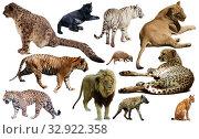Купить «Set of wild mammals isolated over white», фото № 32922358, снято 25 марта 2020 г. (c) Яков Филимонов / Фотобанк Лори