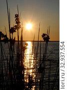 Купить «Sonnenuntergang, sonne, abend, meer, natur, see, abends, abendsonne, sonnenstrahl, sonnenstrahlen, romantisch, wolke, ozean, wolken, gras, gräse, pflanzen», фото № 32937554, снято 2 июня 2020 г. (c) easy Fotostock / Фотобанк Лори