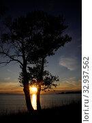 Купить «Sonnenuntergang, baum, bäume, zwei, abend, küste, sonne, abends, abendsonne, romantisch, landschaft, abendrot, meer, meeresküste, wolke, wolken, mittelmeer, pag, kroatien, povljana», фото № 32937562, снято 2 июня 2020 г. (c) easy Fotostock / Фотобанк Лори