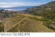 Купить «Виноградники в окрестностях Гурзуфа», фото № 32942474, снято 22 сентября 2019 г. (c) Геннадий Соловьев / Фотобанк Лори