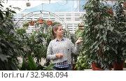 Купить «Portrait of confident young woman successful owner of greenhouse», видеоролик № 32948094, снято 8 ноября 2019 г. (c) Яков Филимонов / Фотобанк Лори