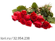 Red roses isolated on a white background. Стоковое фото, фотограф Юлия Бабкина / Фотобанк Лори