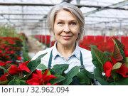 Closeup portrait of female florist with poinsettia. Стоковое фото, фотограф Яков Филимонов / Фотобанк Лори