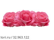 Three pink roses isolated on a white background. Стоковое фото, фотограф Юлия Бабкина / Фотобанк Лори