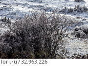 Icy plants in the mountains (Greece, Peloponnese) on a winter. Стоковое фото, фотограф Татьяна Ляпи / Фотобанк Лори