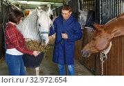 Couple of farmers feeding horse with hay. Стоковое фото, фотограф Яков Филимонов / Фотобанк Лори