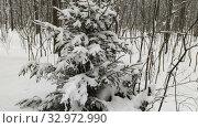 Купить «Wood in snow. Winter landscape», видеоролик № 32972990, снято 22 января 2020 г. (c) Ильин Сергей / Фотобанк Лори