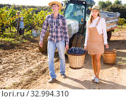 Couple of winegrowers carrying basket with grapes. Стоковое фото, фотограф Яков Филимонов / Фотобанк Лори