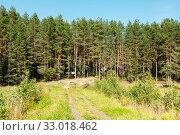 Грунтовая дорога для к месту отдыха на лесной опушке (2019 год). Редакционное фото, фотограф Макаров Алексей / Фотобанк Лори