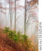 Купить «Autumn scenery in a forrest», фото № 33025614, снято 7 июня 2020 г. (c) easy Fotostock / Фотобанк Лори