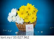 Купить «bouquet of white chrysanthemums with a greeting card for mom», фото № 33027962, снято 4 февраля 2020 г. (c) Peredniankina / Фотобанк Лори
