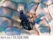 Купить «Dead beetle in the palm of your hand», иллюстрация № 33028586 (c) Парушин Евгений / Фотобанк Лори