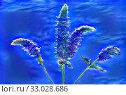 Купить «Red flower Mentha in the garden around city», иллюстрация № 33028686 (c) Парушин Евгений / Фотобанк Лори