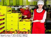 Купить «Cheerful woman working on producing sorting line at fruit warehouse, showing boxes full of ripe juicy peaches», фото № 33032902, снято 8 июня 2019 г. (c) Яков Филимонов / Фотобанк Лори