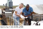 Woman and man farmers feeding newborn calf from bottle at the cowhouse. Стоковое фото, фотограф Яков Филимонов / Фотобанк Лори