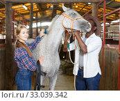 Купить «Workers of horse stable with roan horse», фото № 33039342, снято 2 октября 2018 г. (c) Яков Филимонов / Фотобанк Лори