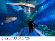 Купить «Посетители гуляют вдоль подводного тоннеля в океанариуме», фото № 33045726, снято 23 марта 2019 г. (c) Татьяна Белова / Фотобанк Лори