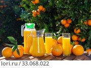 Купить «Jug and glasses of freshly squeezed orange juice with oranges in an outdoor setting during summer», фото № 33068022, снято 26 мая 2020 г. (c) Яков Филимонов / Фотобанк Лори