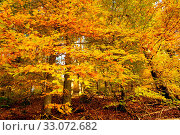 Купить «Trees with golden leaves in autumn and sunrays.Colorful autumn background.», фото № 33072682, снято 9 апреля 2020 г. (c) easy Fotostock / Фотобанк Лори