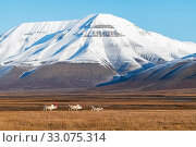 Купить «Svalbard reindeer (Rangifer tarandus platyrhynchus), Svalbard, Norway, September.», фото № 33075314, снято 23 февраля 2020 г. (c) Nature Picture Library / Фотобанк Лори