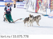 Купить «Male child mushing sled dog team running on distance Sled Dog Racing Competition», фото № 33075778, снято 1 марта 2018 г. (c) А. А. Пирагис / Фотобанк Лори